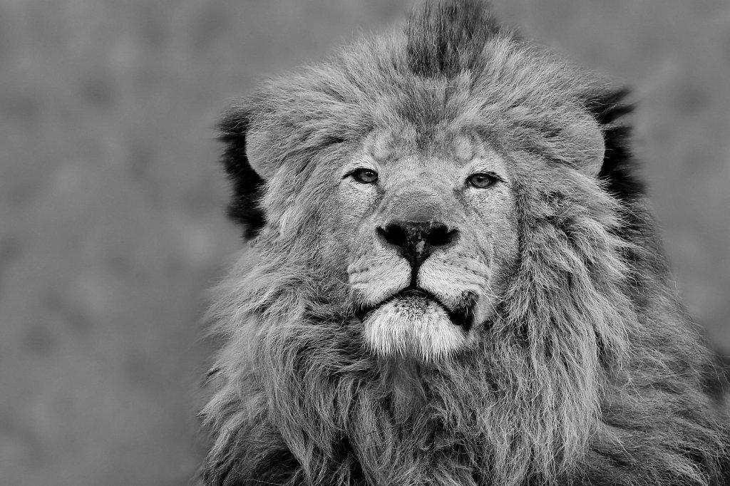 King-Leo.jpg