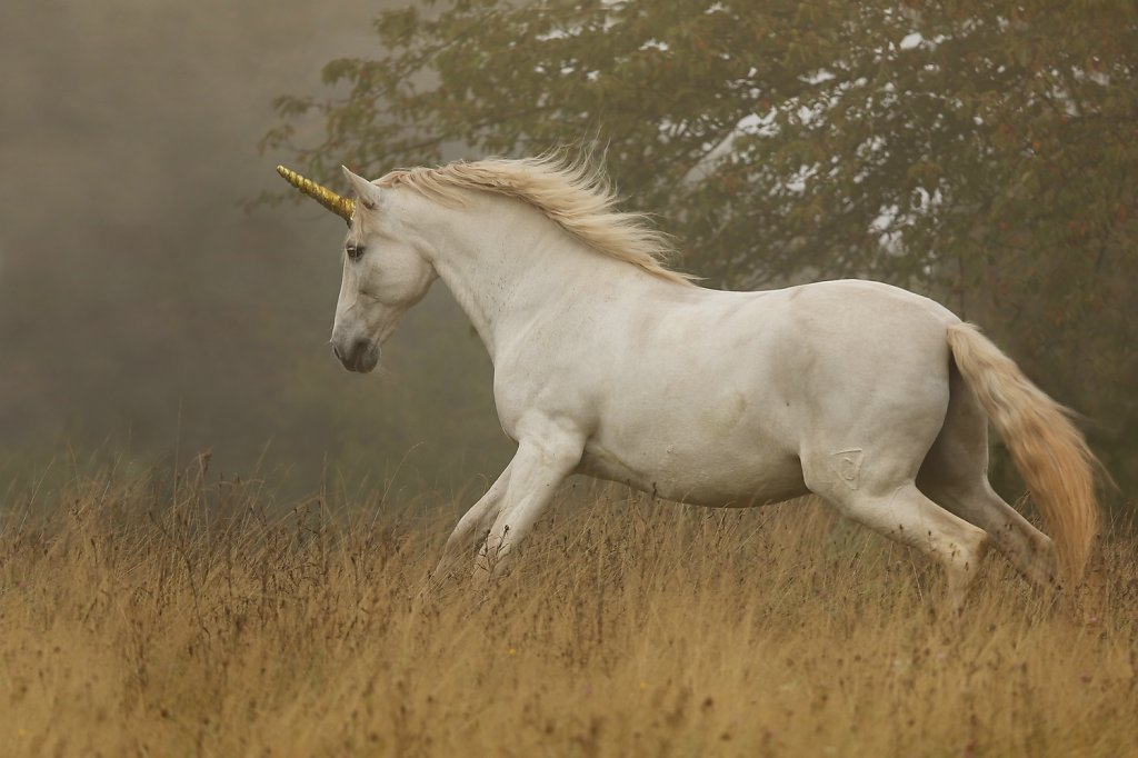 golden-unicorn.jpg