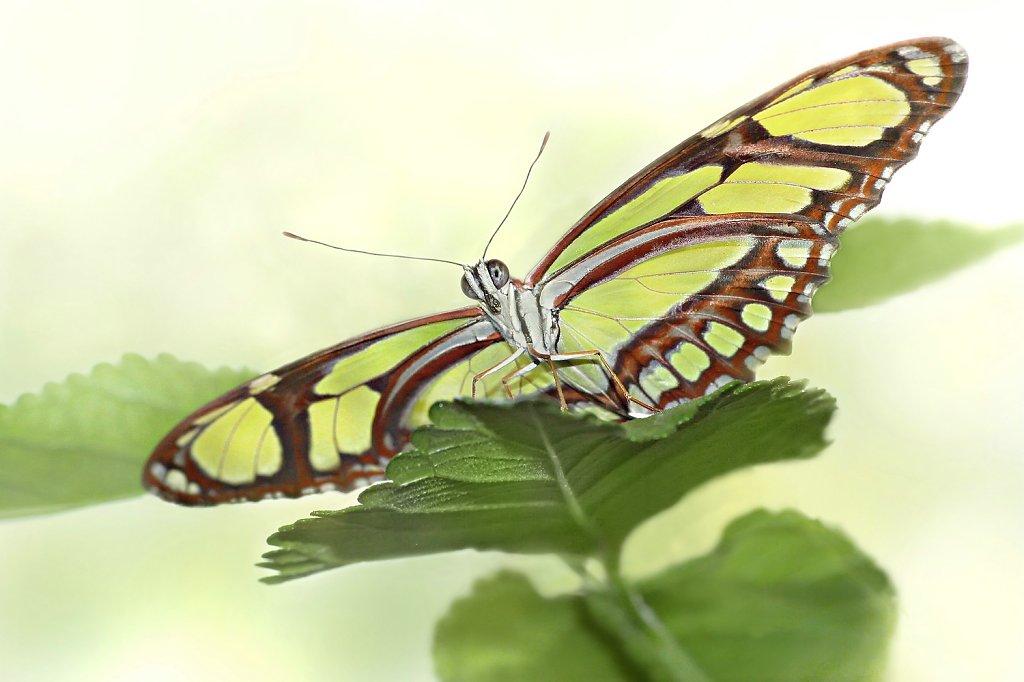 Der-Schmetterling-leicht-und-schoen-aus-Gottes-Traum-geboren.jpg